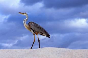 mp-bird-ibis-003-14
