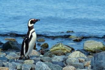 mp-bird-penguin-001-02