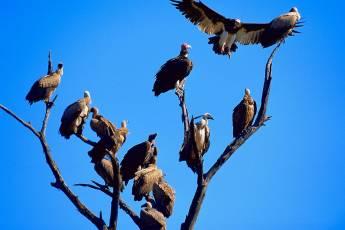 mp-bird-prey-001-06