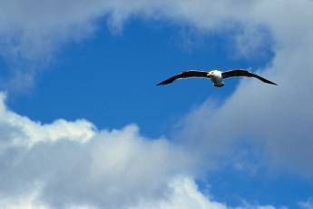 mp-bird-seagull-002-04