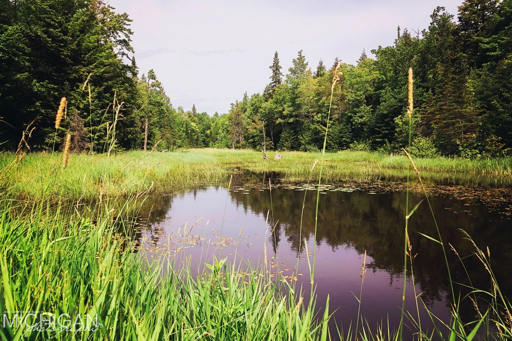 Union Spring Trail Impoundment in the Porcupine Mountains