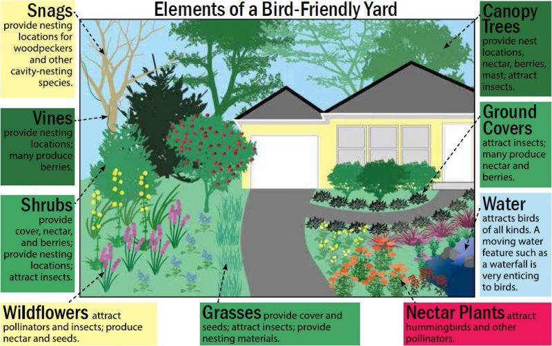 Native Plants for Birds on Birds Backyard Landscapes id=34570