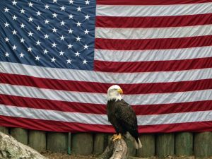 american-eagle-with-flag-407636-m