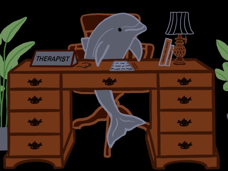 Dolphin sitting at a therapists desk