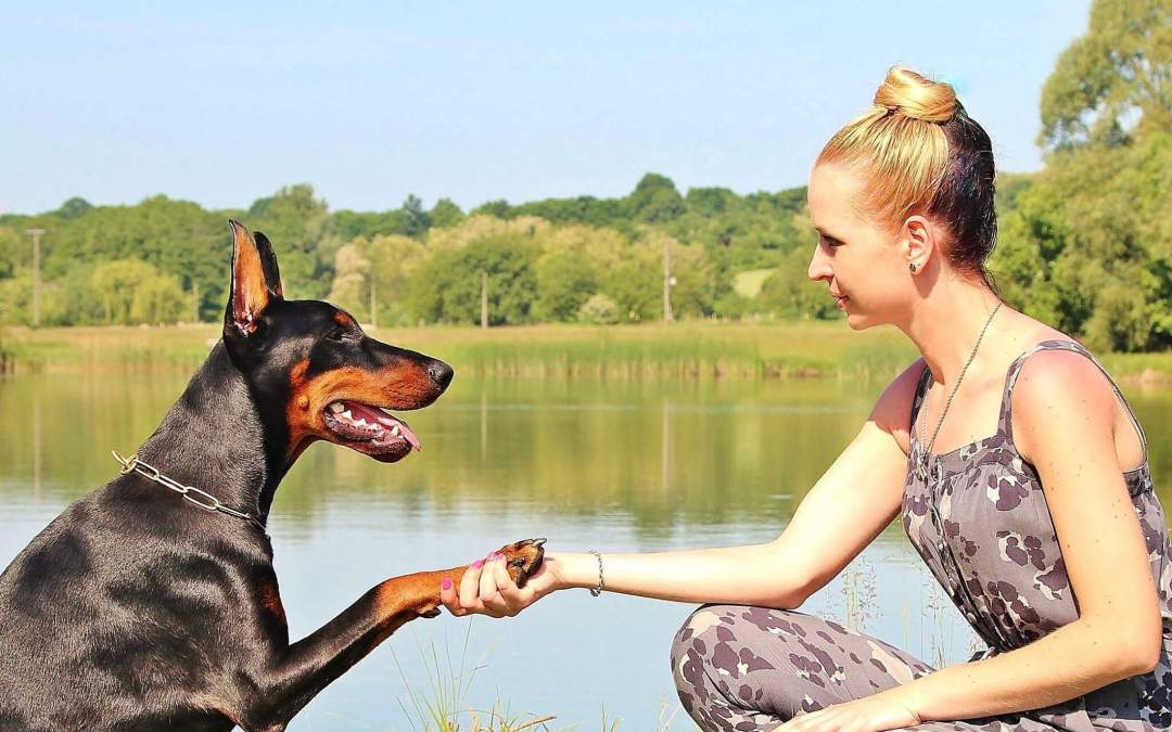 Dog shakes for woman.