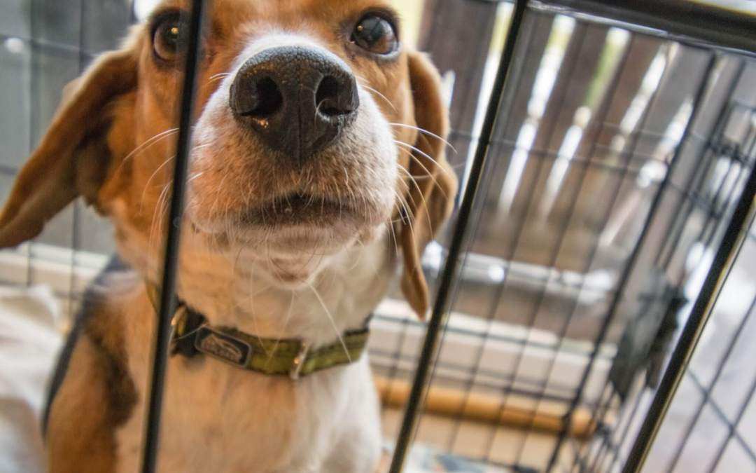 Rescued Animals Continue to Be Victims When They're Evidence