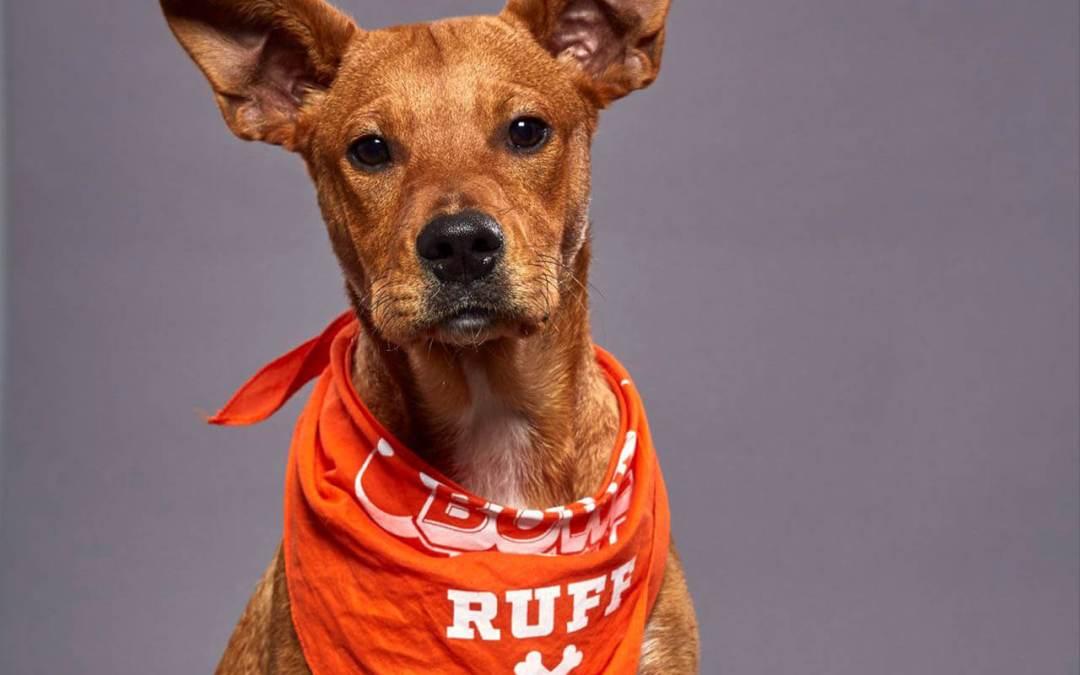 Logan the dog will be at Puppy Bowl XVI.