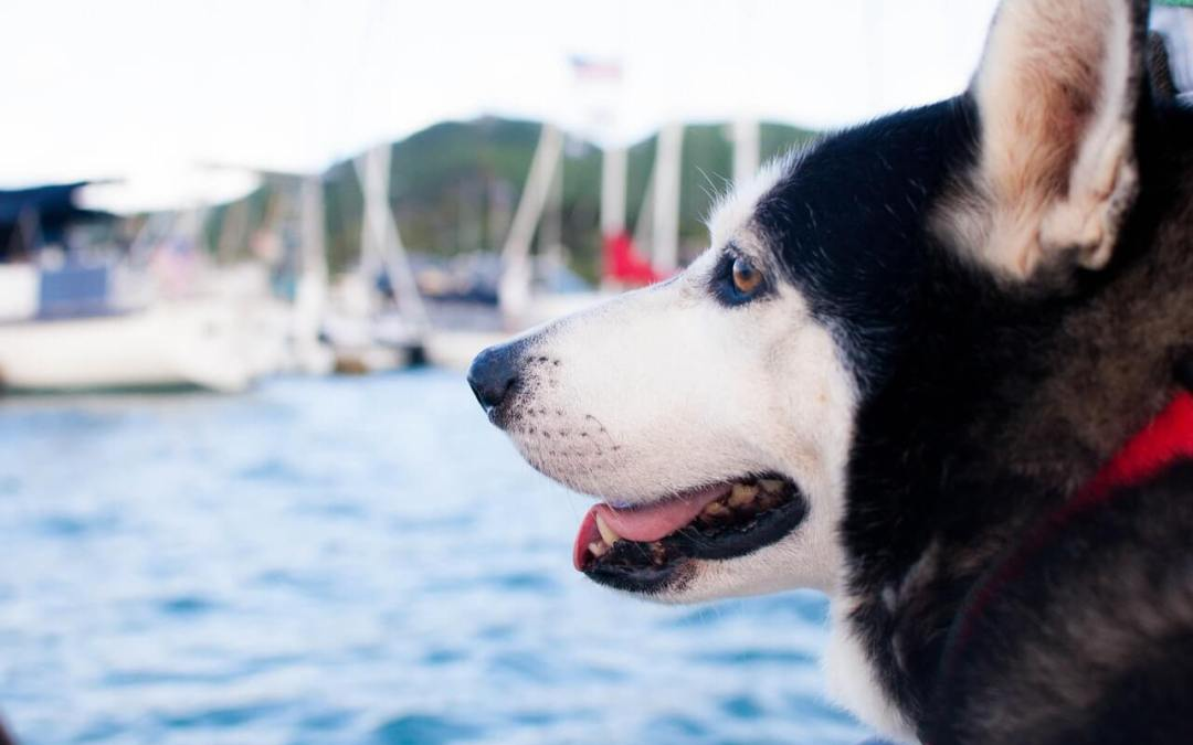 Boat Safety Tips For You and Your Dog