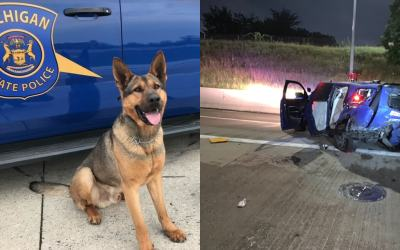 State Trooper K9 Killed in Crash With Suspected Drunk Driver