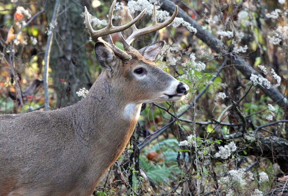 The Changing Face of Deer Research