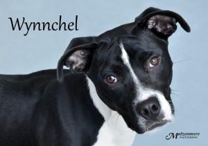 Wynnchel