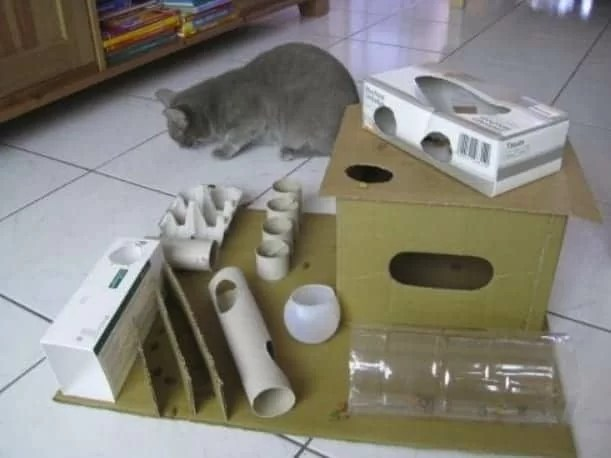 Giochini Per Gatti Fai Da Te 5 Idee Fatte In Casa