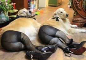 style-radar-cel-mai-nou-trend-in-moda-pentru-caini-chinezii-isi-imbraca-patrupedele-in-colanti
