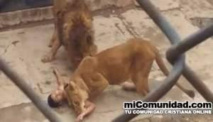Joven se lanza a fosa de leones creyendo que Dios lo salvaría
