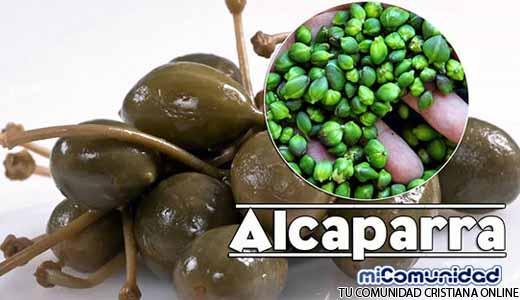 Propiedades Curativas Y Medicinales De La Alcaparra