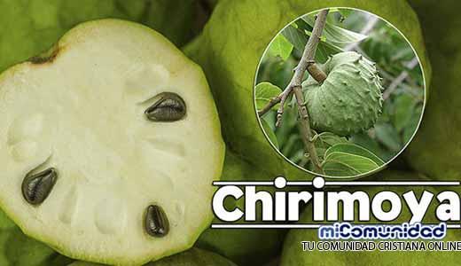 Propiedades Curativas Y Medicinales De La Chirimoya