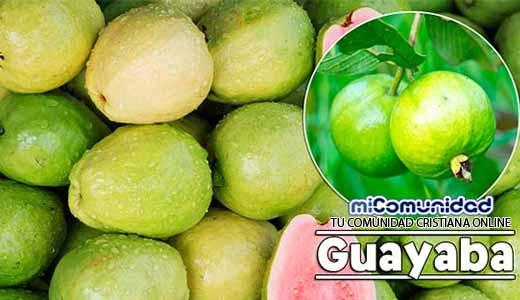 Propiedades Curativas Y Medicinales De La Guayaba