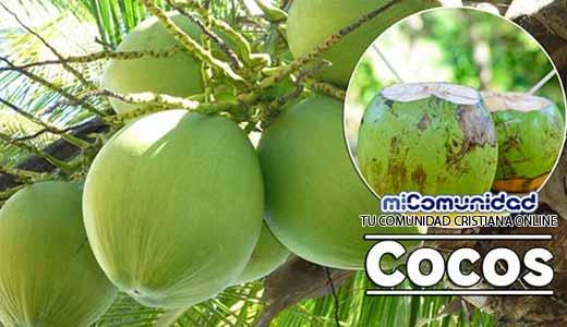 Propiedades Curativas Y Medicinales Del Coco