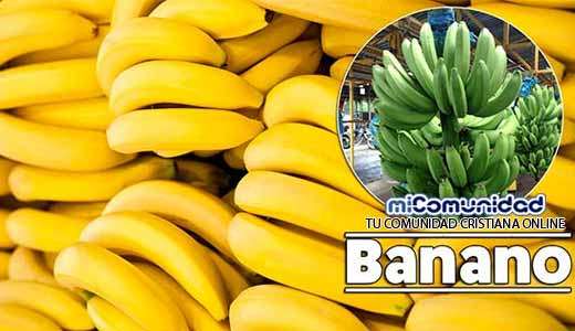 Propiedades Curativas Y Medicinales Del Plátano (Banano)