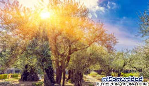 Nuevo Sanedrín planta árboles para leña del Servicio del Tercer Templo