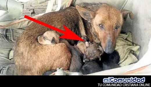 Mujer Halla Perra Callejera con Seis Cachorros – se Acerca y ve una Manito que se Asoma Entre Ellos