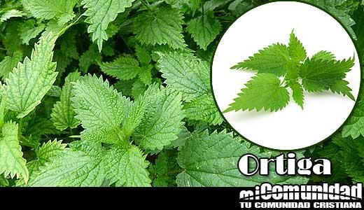 Propiedades curativas y medicinales de la Ortiga