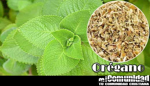 What Are the Health Benefits of Oregano?