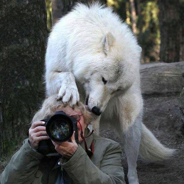 Nature-photographers41__880
