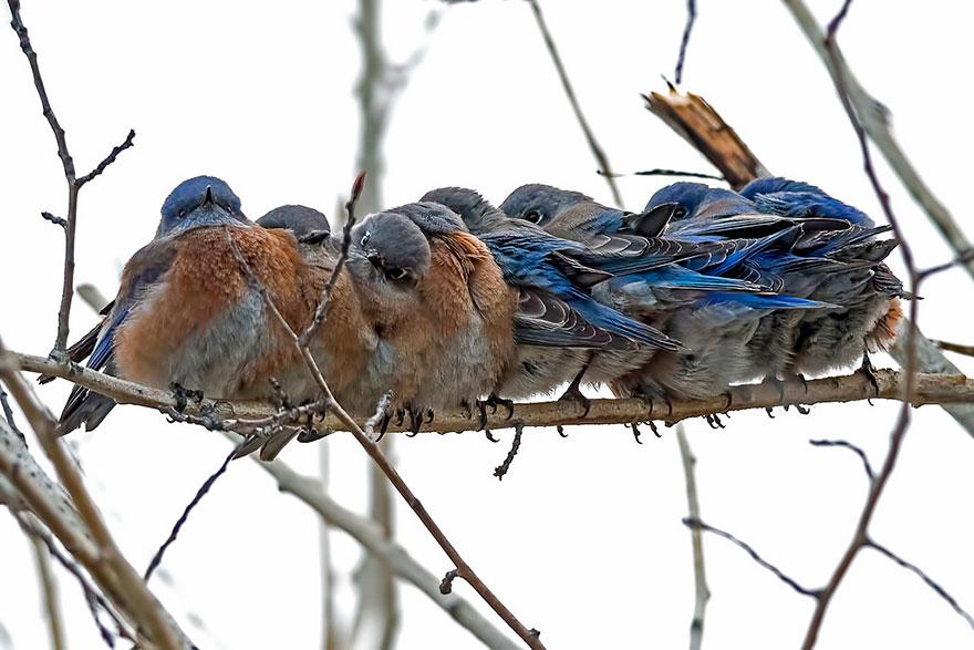 16 Pájaritos que se dan Calor entre ellos mismos te van a enamorar