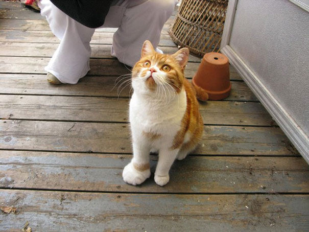 gatos-con-picaduras-de-abejas-6 (1)
