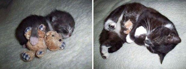 gatos-creciendo-antes-despues-2