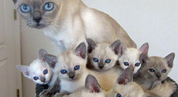 15 Mam 225 S Orgullosas Con Sus Gatitos So 241 Ados Mi Contenido
