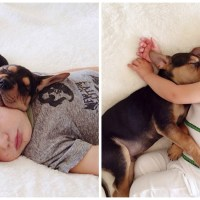 Fotografias de un hermoso bebé y su cachorro echándose la siesta juntos al pasar de los años