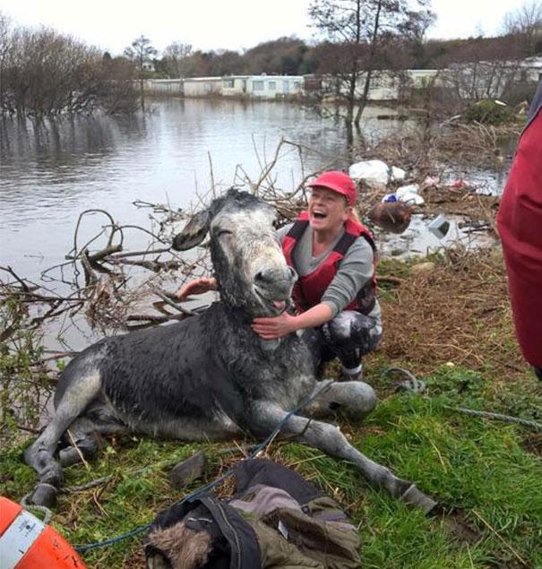 burro-rescatado-riada-sonrisa-irlanda-4