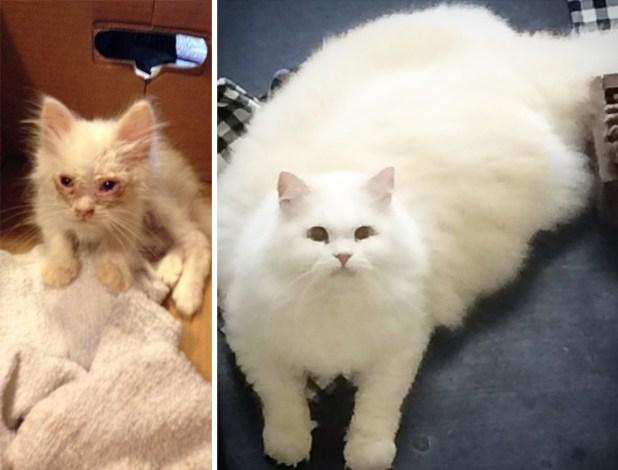 gatito-suave-encontrado-lado-de-una-carretera-1