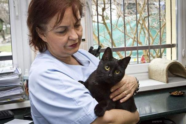 gato-enfermero-veterinario-refugio-animales-radamenes-polonia-2