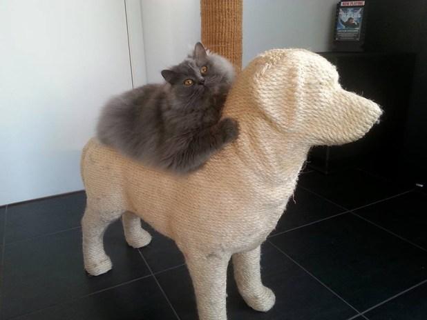 rascador-gatos-forma-perro-erik-stehmann-2
