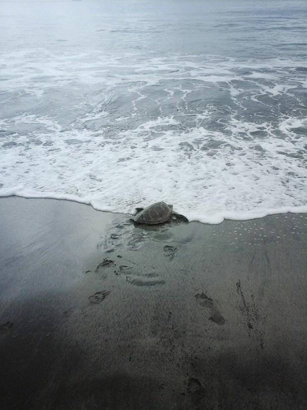 rescata-tortugas-marinas-arron-culling-papua-nueva-guinea-3