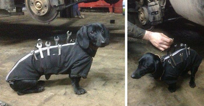 Este perro ayuda a arreglar coches a su dueño y es el asistente mas adorable del mundo.