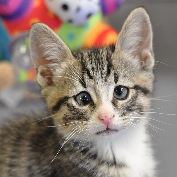 bum-gato-ojos-preocupados-4