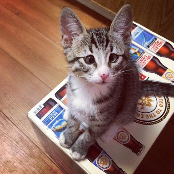 bum-gato-ojos-preocupados-5