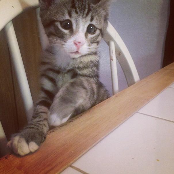 bum-gato-ojos-preocupados-6
