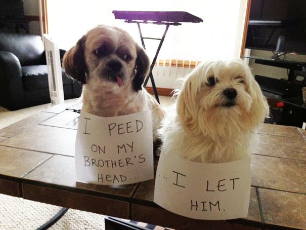 castigo-avergonzar-duos-animales-10
