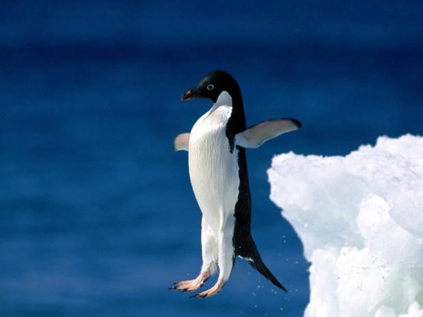 cutest-penguins-awareness-day-40__880