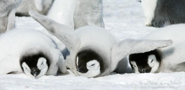 dia-concienciacion-pinguinos-10