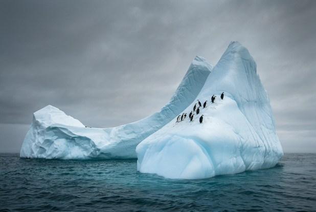 dia-concienciacion-pinguinos-25