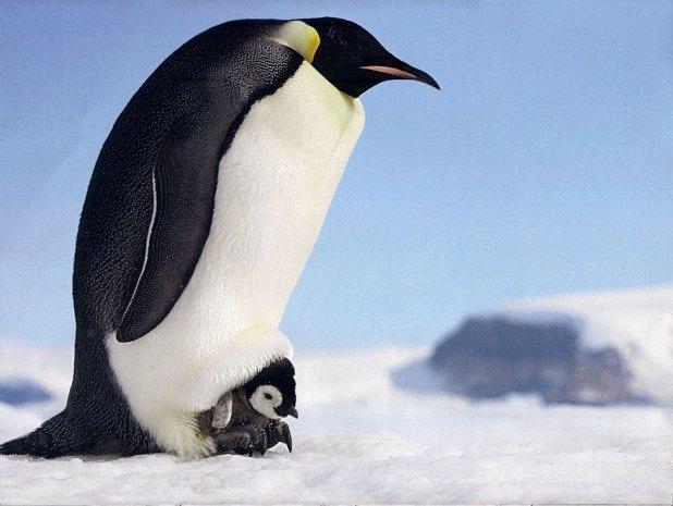 dia-concienciacion-pinguinos-34