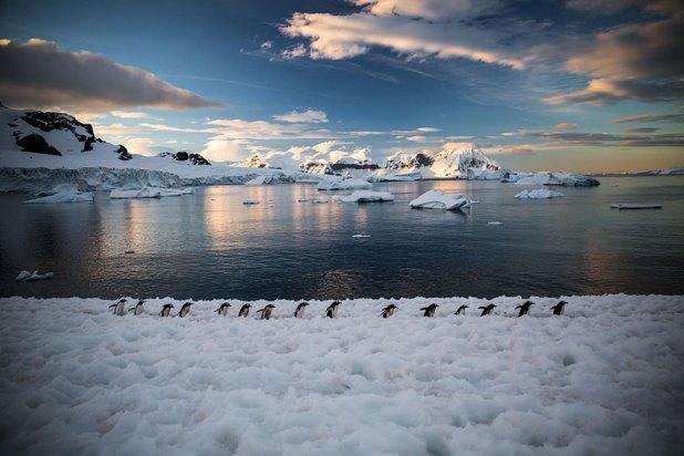 dia-concienciacion-pinguinos-5