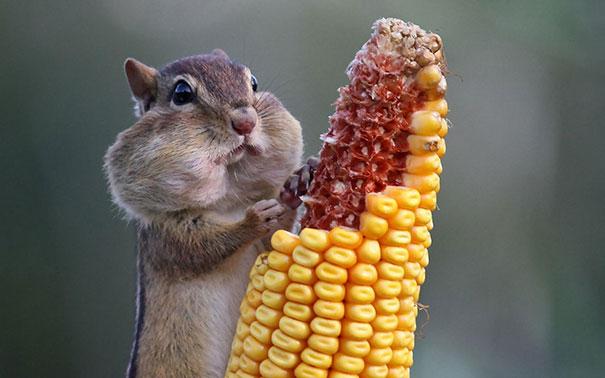 divertidos-animales-comiendo-7