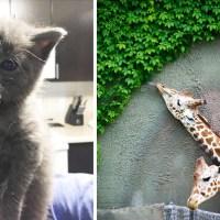 15 Fotos De Animales Comiendo Que Te Harán Sonreír